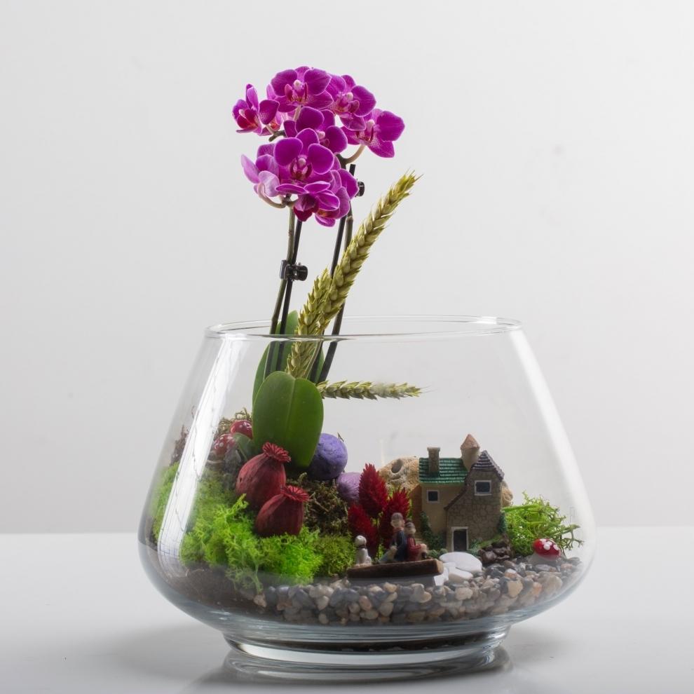 Mini Orkide Teraryum