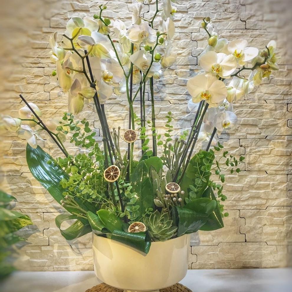 Orkide Modelleri İzmir