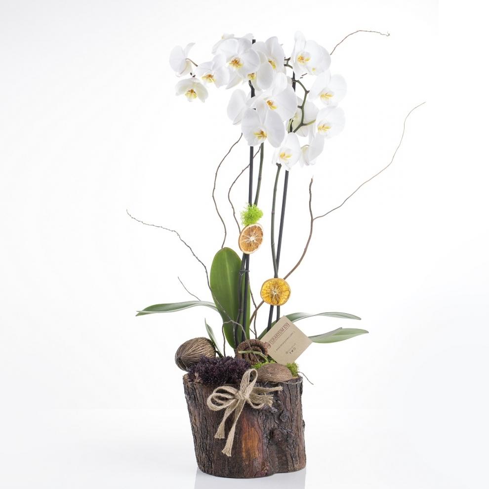 Kütükte Orkide ve Sukulent