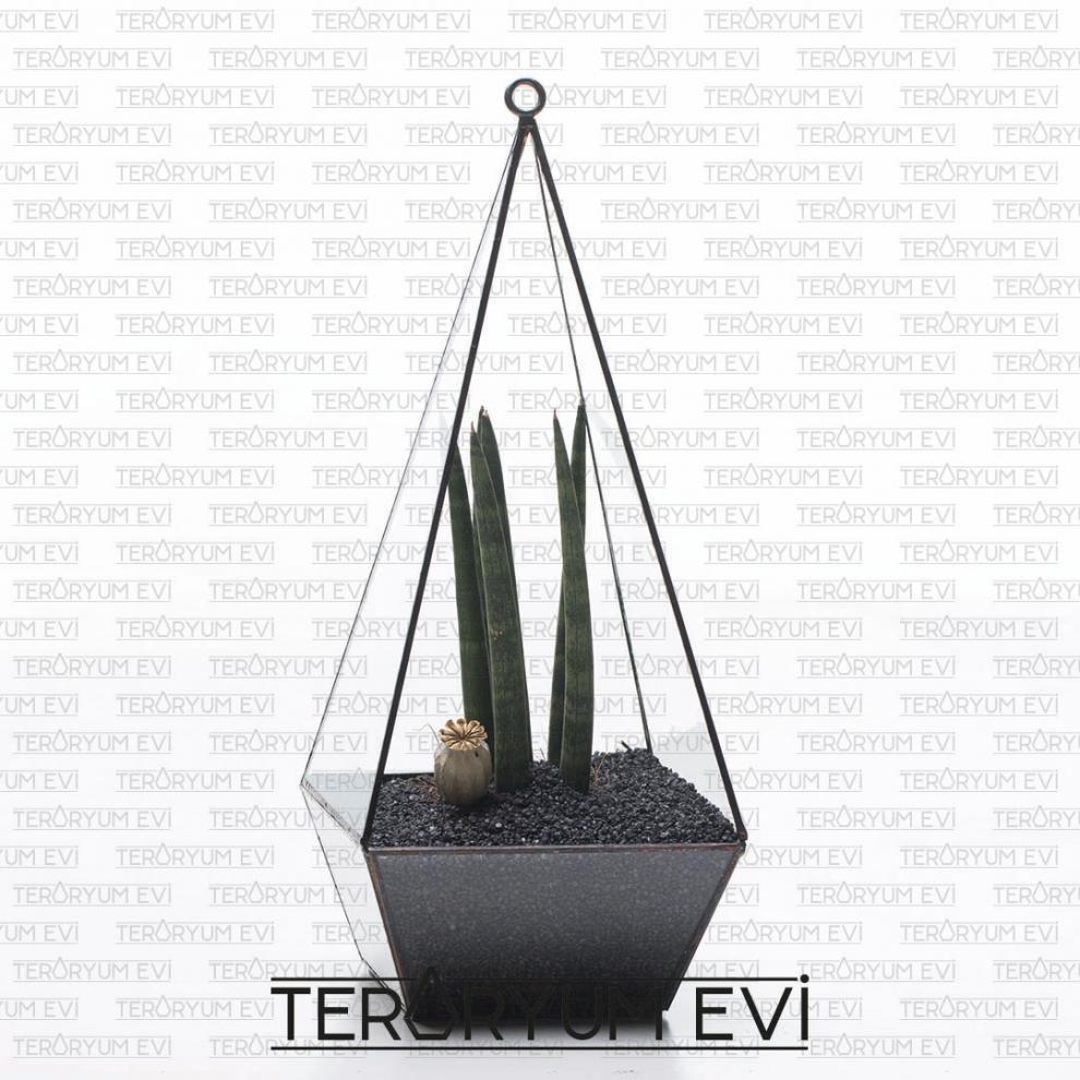Sansevieria Teraryum