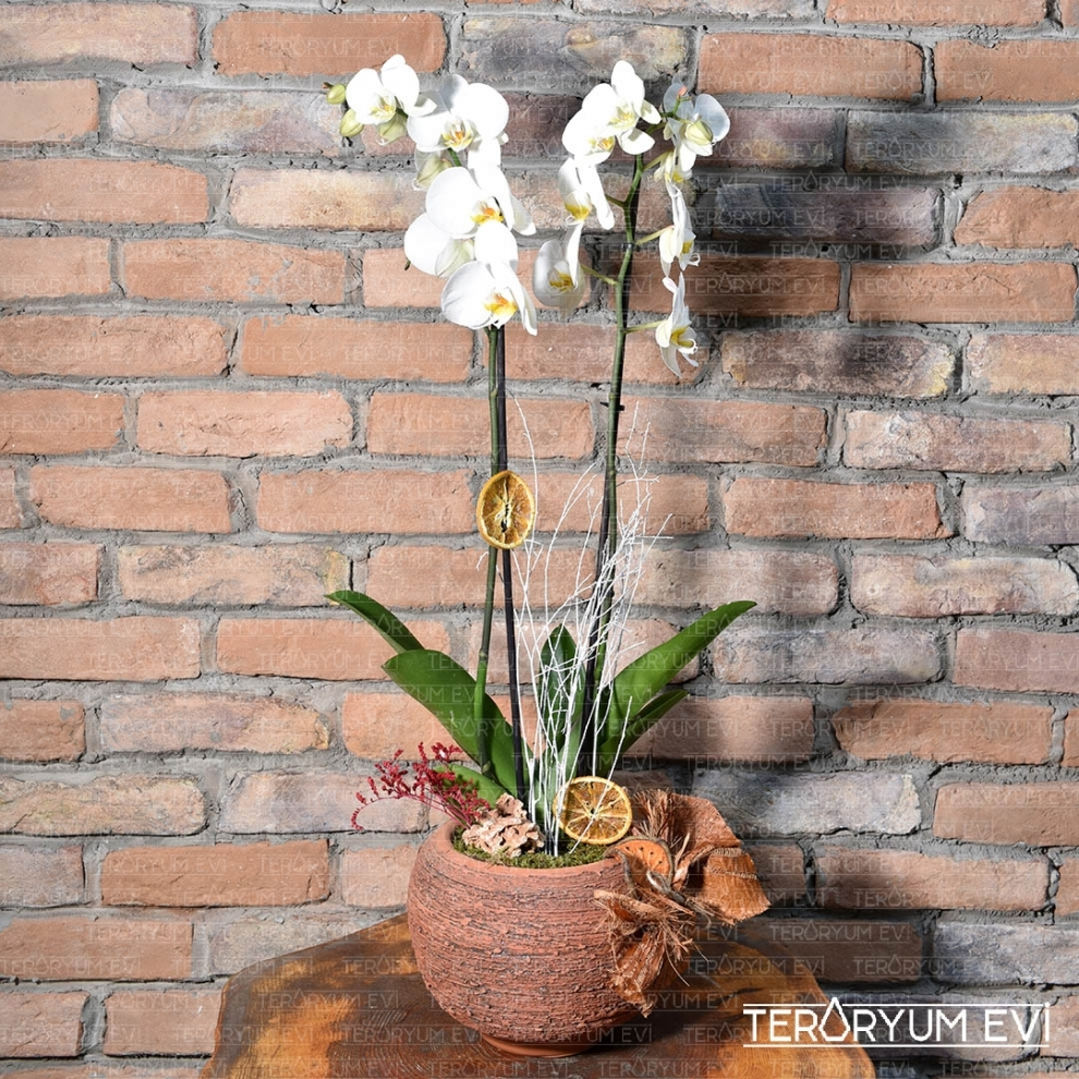 En Özelime Orkide
