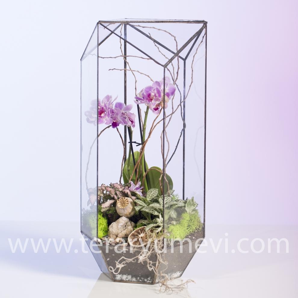 Geometrik Camda Orkide