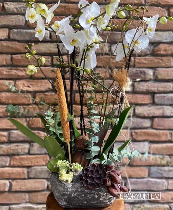 4 Dal Jumbo Orkide