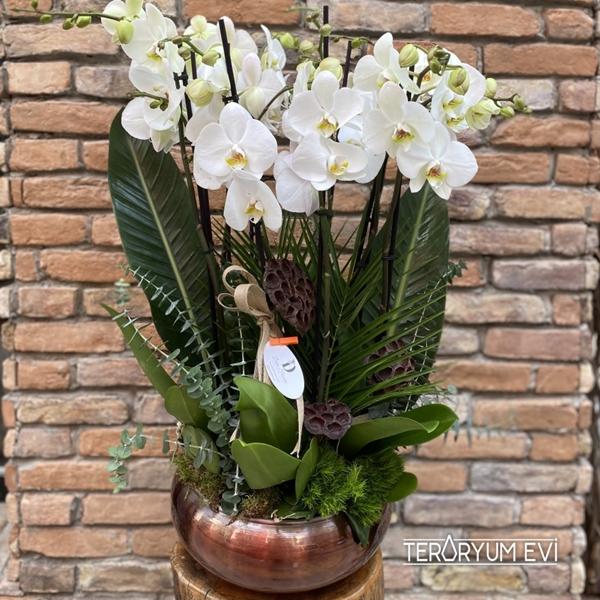 10 Dal Jumbo Orkide