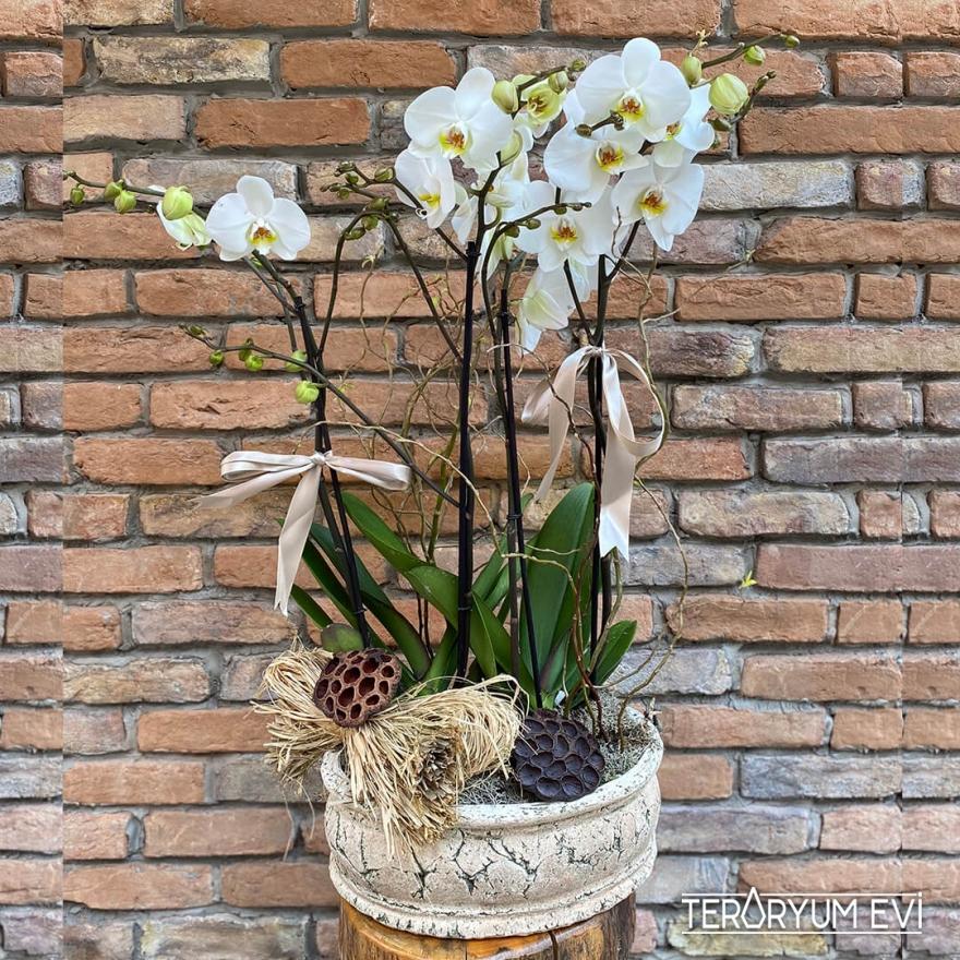 Antik Seramik 4'lü Orkide