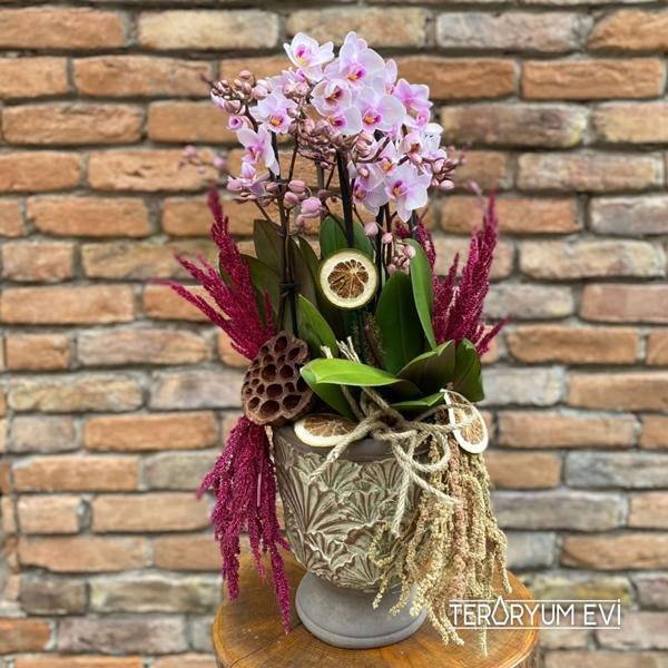 Multi Orkide Bahçesi