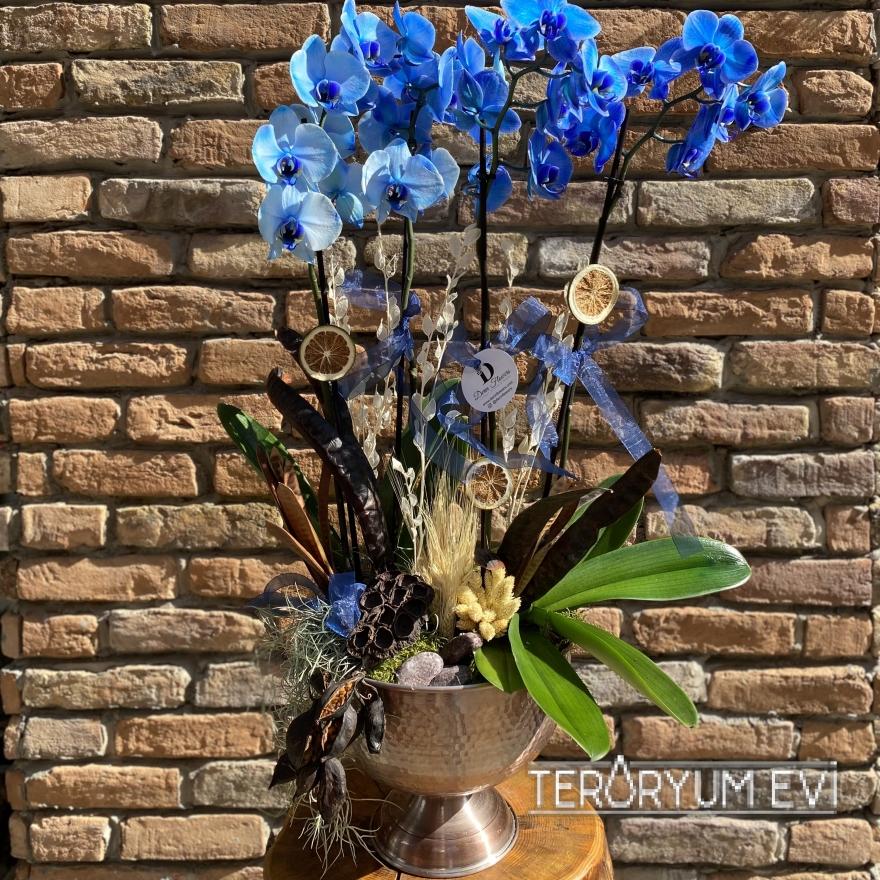 4 Dal Mavi Orkide Tasarım