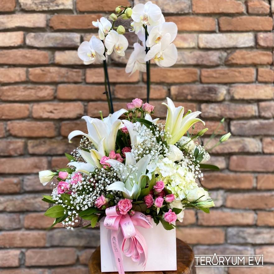 Kutuda Orkide Aranjman