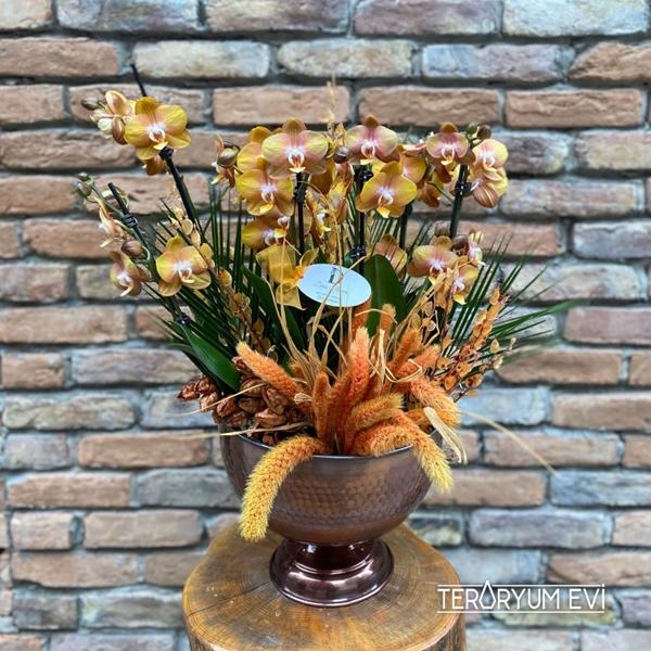 Multi Orkideler