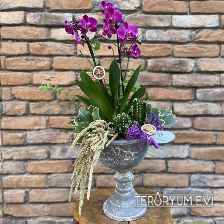 İthal Multi Orkide Tasarım