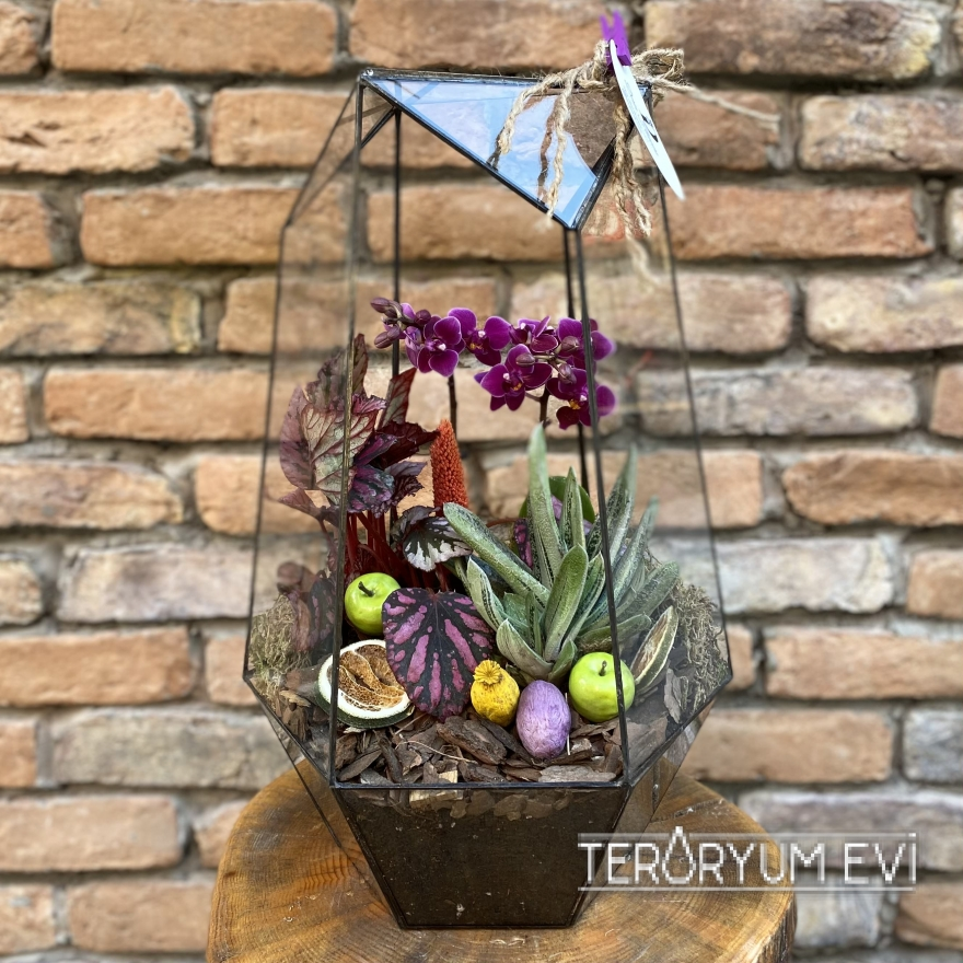 Geometrik Cam Mini Orkide