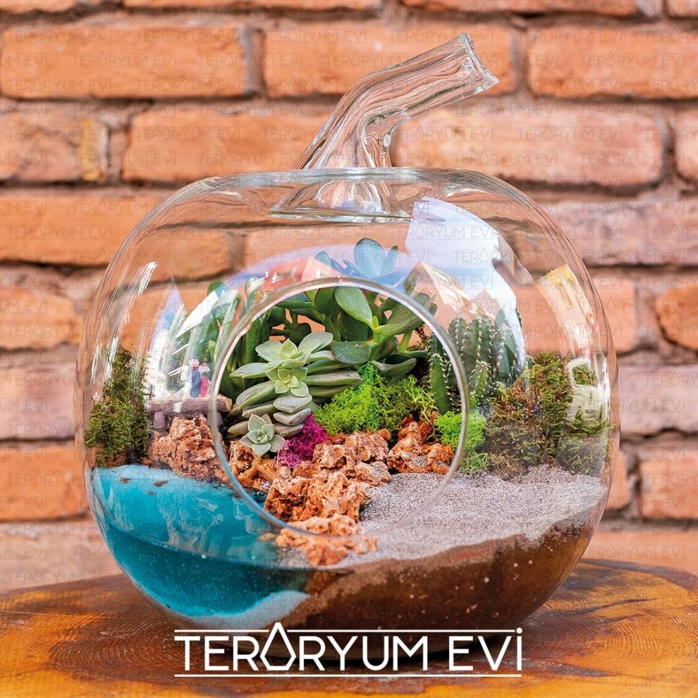 Teraryum South Beach