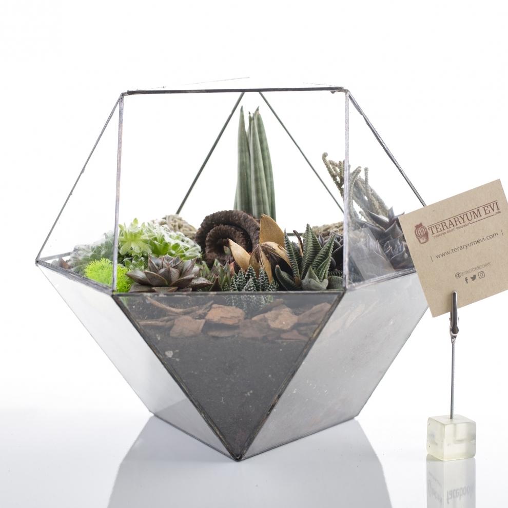 Terrarium Nature