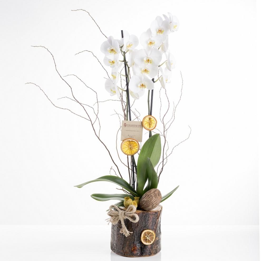 Kütükte Beyaz Orkide