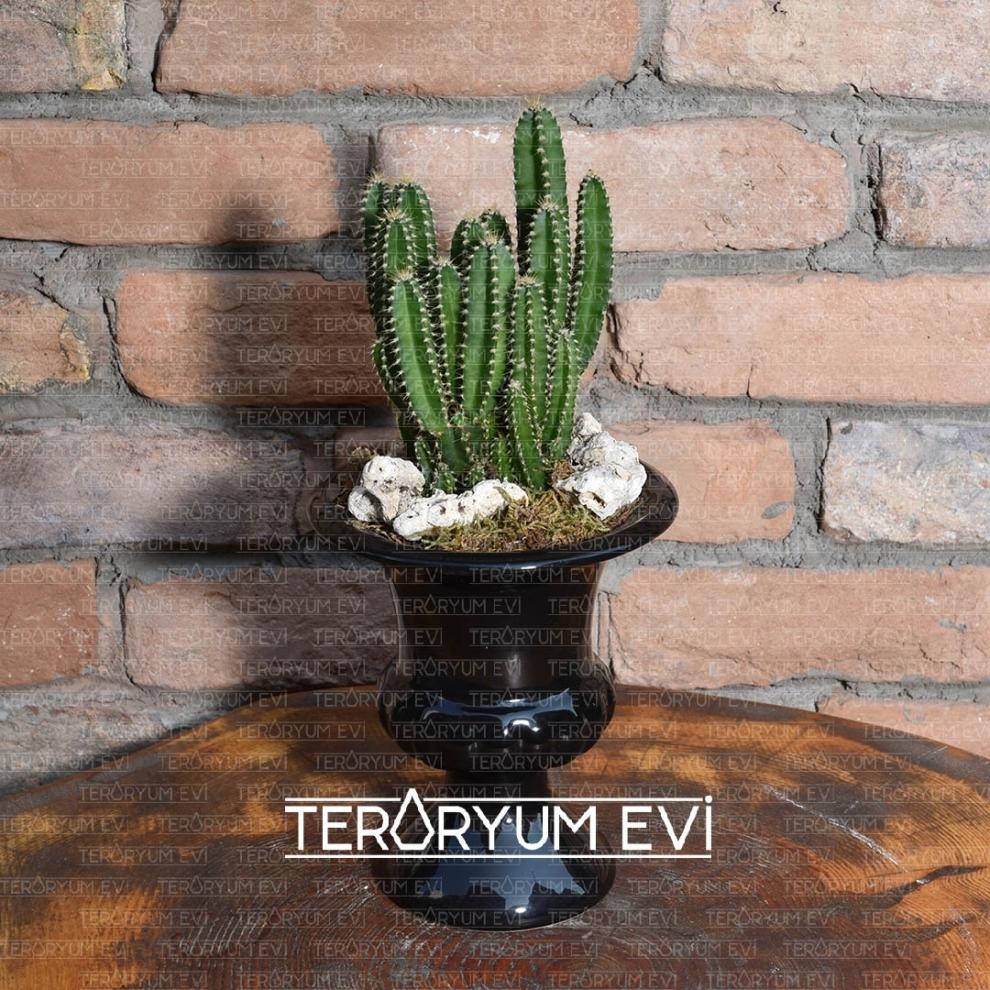 Teraryum Meksika
