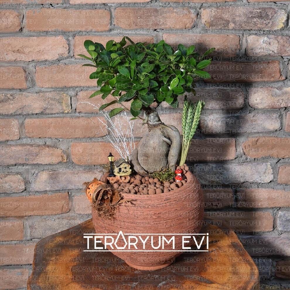 Bonsai Ficus Tasarım
