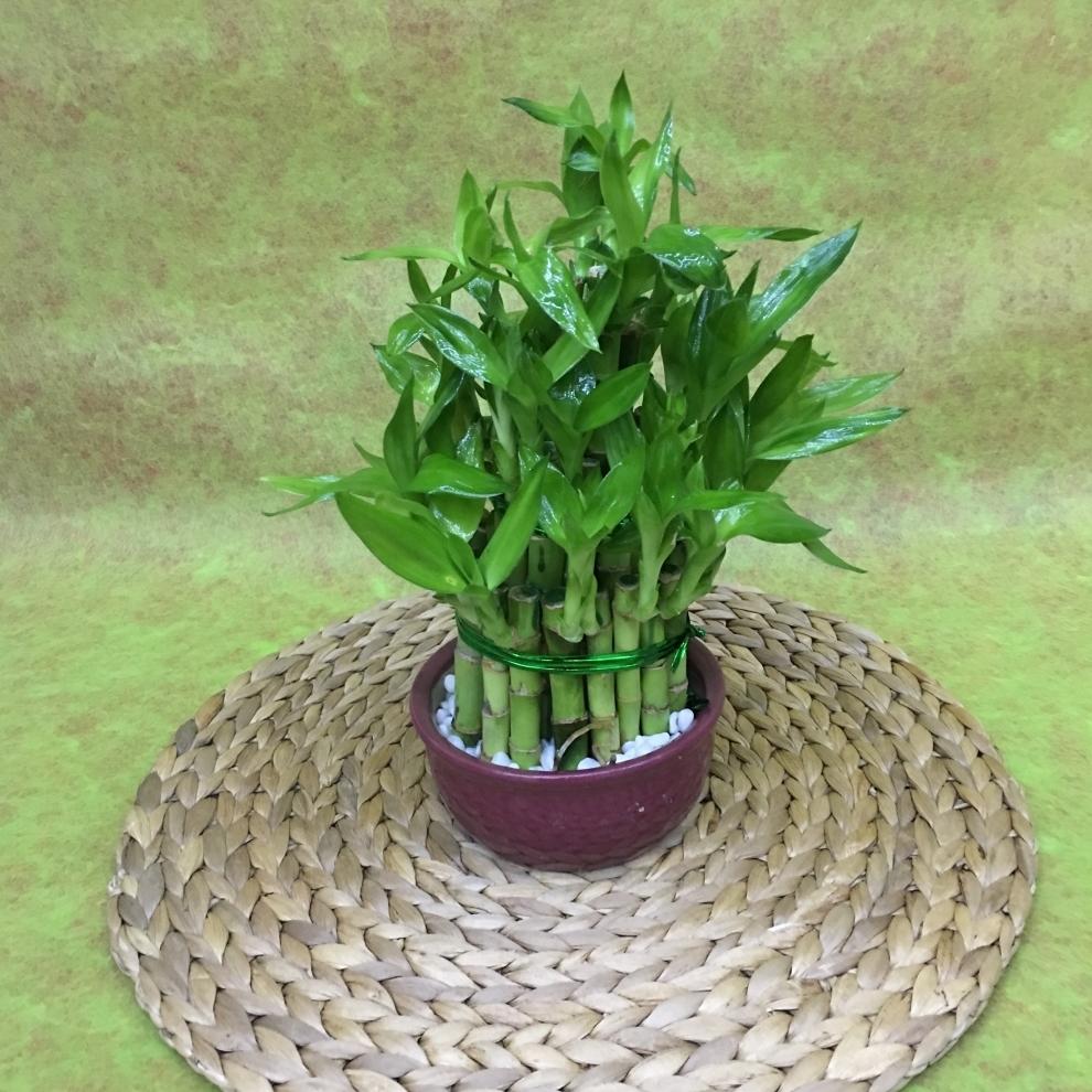 Set Bambu
